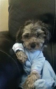 Dog in pajamas. I'm done.