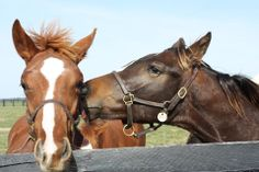 What do you think Riddler is saying to his buddy?  #horsesecrets #psst #SienaFarm