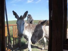 New day, new week, new month! Here's Mutty and Murjanah with their   'boon' friend to spur you on! Courtesy: Eastern Cape Horse Care Unit,   Port Elizabeth (Republic of South Africa).