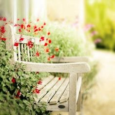 Summer romance. This would be lovely up against the house where it's too dry for plants to grow. I could put Morning Glories or Climbing Nasturtiums in pots beside the bench.
