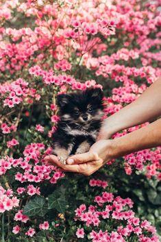11 Best Mona Care images | Dog cat, Pets, Doggies