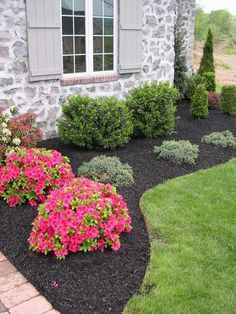 Bark chippings around small shrubs looks tidy and keeps the weeds at bay.