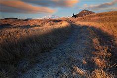 Единственное, что оказывает ощутимое влияние на исландские травы - это местный климат.   Исландский климат отличается своей суровостью и только сильные травы могут выжить в его условиях. Об особых свойствах трав может свидетельствовать тот факт, что Исландия возможно единственное место в мире где не выживают комары (из-за постоянных перепадов температур, даже в течение одного дня, личинки комаров погибают).     Thanks iuriebelegurschi for the shots!