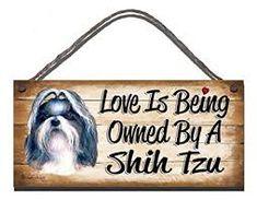 Image result for terrier shih tzu funny pictures Shih Tzu, Terrier, Funny Pictures, Image, Decor, Funny Pics, Decoration, Decorating, Terriers