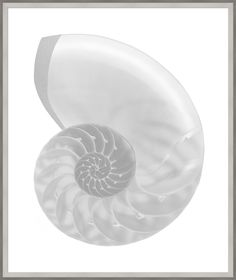 Silver Leafed Shell 4 (31.25x37.25) (WD)