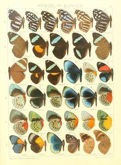 File:Macrolepidoptera15seit 0207.jpg