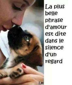 La plus belle phrase d'amour est dite dans le silence d'un regard. Animals And Pets, Cute Animals, Adoption, Amor Animal, Love Dogs, Four Legged, Animal Kingdom, Animals Beautiful, Decir No