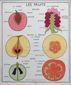 Arrangement of leaves - Fruit Vintage French Posters, French Vintage, French Classroom, Teaching Methods, School Posters, Vintage School, Teaching French, Learn French, French Language