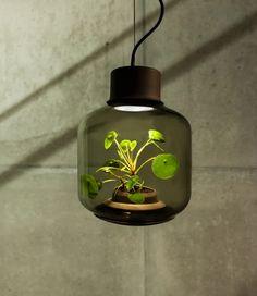 Lampade progettate per far crescere le piante in ambienti senza finestre