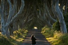 The Dark Hedges, Un tunnel d'arbres en Irlande