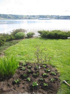 Planting the purple petunia patch. Purple Petunias, Humble Abode, Planting, Seaside, Plants, Beach, Coast