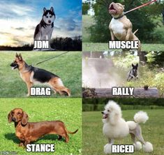 If dogs were cars. Car memes 11/04/15.