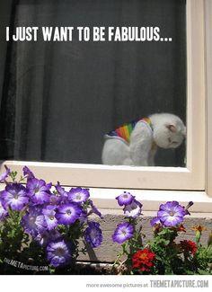 Sad fabulous cat…