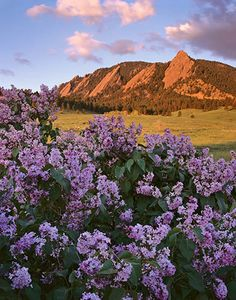 Love the way this picture of the #Flatirons in #Boulder was framed!