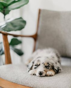 "banjosandbibles: ""sleepy pup """