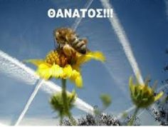 Μείωση των μελισσών ή μύθος;