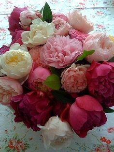 A gorgeous bouquet of Peonies They are so pretty but don't last long. Fresh Flowers, Beautiful Flowers, Purple Flowers, Peony Colors, Draw Flowers, Exotic Flowers, Yellow Roses, Pink Roses, Deco Floral