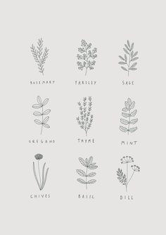 Herb illustrations by Ryn Frank Herb illustratio Illustration Herbes, Botanical Illustration, Botanical Drawings, Aesthetic Drawing, Flower Aesthetic, Aesthetic Painting, Floral Drawing, Drawing Flowers, Painting Flowers