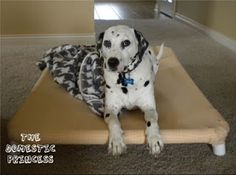 DIY pvc pipe dog bed