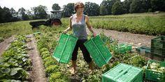 Biovegane Landwirtschaft: Gurke ohne Tier - taz.de