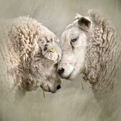 WOOLLY LOVE