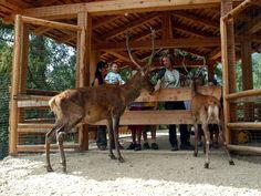 Area Faunistica Parco Nazioale dello Stelvio- Peio-, Trentino - Alto Adige
