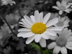 I simply love daisies!