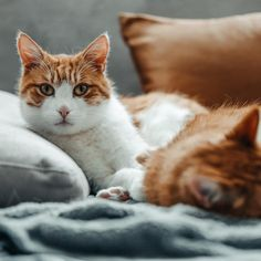 Mein süßer Keks 🍪 was wird der wohl für Augen 👀 machen, wenn die Corona-Krise vorbei und Mama & Papa nicht 24/7 für ein Schmusi 🥰zu Verfügung stehen???😱⠀ —————————————————————————⠀ #kittensoftheday #instakittens #purrpurrpurr #cutekitty #cutecatcrew #catsoftheday #pleasantcats #magnificent_meowdels #kittenlovers #bestcat #purrfection #catloversworld #cutecatsofinsta #catsfollowers #kittensofig #dailykitten #nicestkitties #catsoftheday #catsogram #meows #meowmeow #catsrule #excellent_cats… Animals, Instagram, Corona, Cookie, Eyes, Animales, Animaux, Animal, Animais