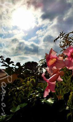 """Fleurs et le ciel"" de Yolanda Ramos"