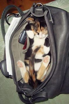 Don't leave home without me.