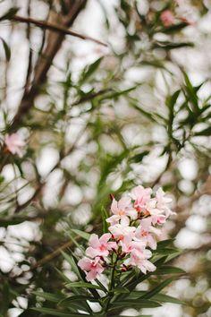 Fukushen Gardens, Okinawa, Japan