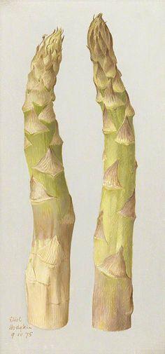Eliot Hodgkin (1905-1987) - Study of two Asparagus, tempera on panel, 1975.