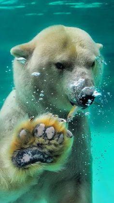 Our World's Wildlife – Сообщество – Google+