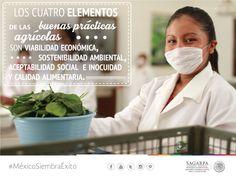 Los cuatro elementos de las buenas prácticas agrícolas son viabilidad económica, sostenibilidad ambiental, aceptabilidad social, e inocuidad y calidad alimentaria. SAGARPA SAGARPAMX #MéxicoAgroPotencia