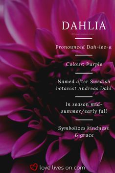 Most current Free Funeral Flowers aesthetic Ideas No matter whether you are planning as well as participating in, funerals are always a sorrowful and often dema. Purple Flower Bouquet, Purple Dahlia, Purple Wedding Flowers, Dahlia Flower, Gold Flowers, Rare Flowers, Amazing Flowers, Colorful Flowers, Flower Meanings