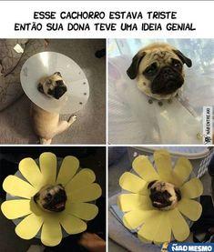 Fotos engraçadas de bichinhos fofos #cachorro #gato #humor