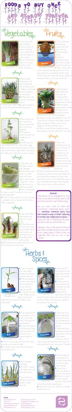 Foods you can regrow from scraps | ecogreenlove