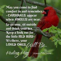 Angels from Heaven...6-3-16 I saw a cardinal today at 7:15 AM on my drive home... I cried but Thank You God