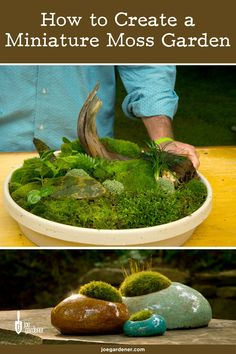 Indoor Fairy Gardens, Indoor Water Garden, Mini Fairy Garden, Lawn And Garden, Miniature Zen Garden, Growing Moss, Growing Plants, Garden Terrarium, Succulents Garden