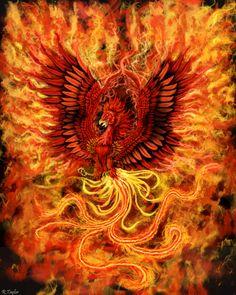 Mega phyr phoenix