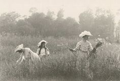 Women in a field picking flowers..  turn of the 20th Century