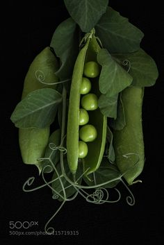 Peas in a Pod by ginacoxphotography