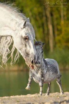 Too cute! #horses