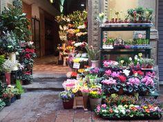Bologna, Italia  #Travel