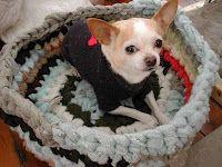 Vestiti e accessori fai da te per cani e gatti - Pane, Amore e Creatività | Pane, Amore e Creatività