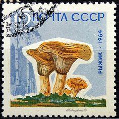 Russia.  VARIOUS MUSHROOMS. Scott 2697 A1484, Issued 1964 Nov 25, Litho., Perf. 12, 12. /ldb.