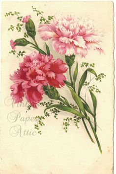 Pink Carnations Vintage French Postcard Chromo Post Card from Vintage Paper… Botanical Flowers, Botanical Prints, Floral Prints, Flower Images, Flower Art, Watercolor Flowers, Watercolor Art, Carnation Tattoo, Pink Carnations