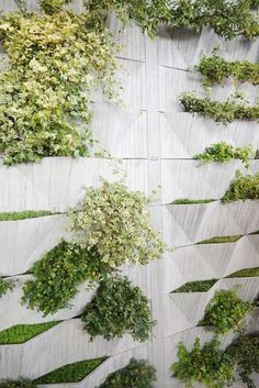 On Trend Wednesday: Green Walls It's time to spruce up those walls with living art. Lush and colorful plants can be arranged in intriguing designs both indoors and outdoors. The walls of these masterpieces can be modern or traditional, because the plants give an unmistakable natural appeal to the space. It's a little different to say you have to water your walls, but the upkeep is worth the bold statements.