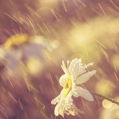 Flowers & Rain