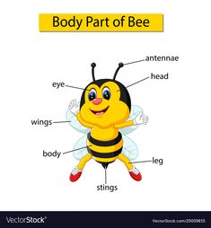 Diagram showing body part bee Royalty Free Vector Image - Body Parts Learning English For Kids, English Lessons For Kids, Kids English, Teaching English, Learn English, Teaching Spanish, Preschool Learning Activities, Teaching Kids, Kids Learning